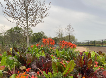 We're ready for the big reveal at the Houston Botanic Garden!